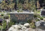 ScotchPineSign